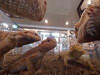 【VR】は虫類でお茶しない?!今、は虫類カフェが密かなブームらしい......