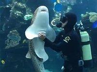 飼育員さんとのスキンシップを見せつける甘えん坊のサメちゃん