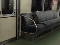 夜の電車に乗車する猫ちゃん