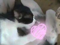【異種姦】犬にフェラチオする猫が目撃されるwww