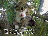 高過ぎる木に登って降りられなくなった猫たちをレスキューするというお仕事