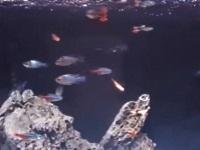 【閲覧注意】元彼が飼っている熱帯魚たちを漂白剤で殺す女性が怖すぎる