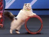 観客全員キュン死!!可愛すぎてヤバい見事な猫サーカス