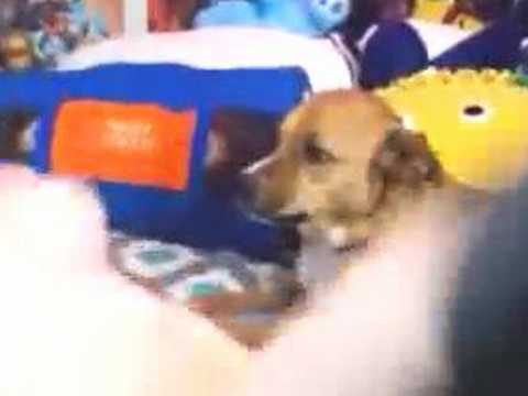 オナニーのイキ方が尋常じゃないほど激しい白人女性が飼い犬にドン引きされてるwww